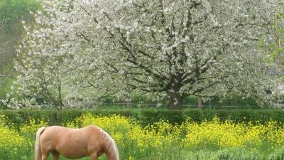 Euregio Pferdeschau