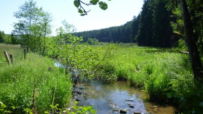 Möhnetal ist grünes Band - Stadtanzeiger Kreis Soest