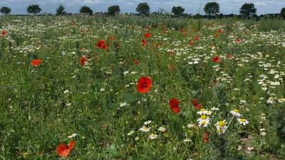 Wertvoller Lebensraum für Flora und Fauna