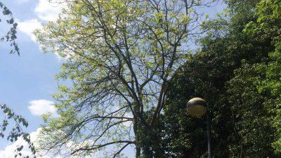 Baumfällungen am Abteiberg - genial-nah.de