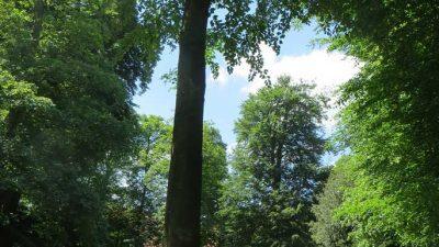 """""""Land der Entdeckungen"""" im Schlosspark der Evenburg"""